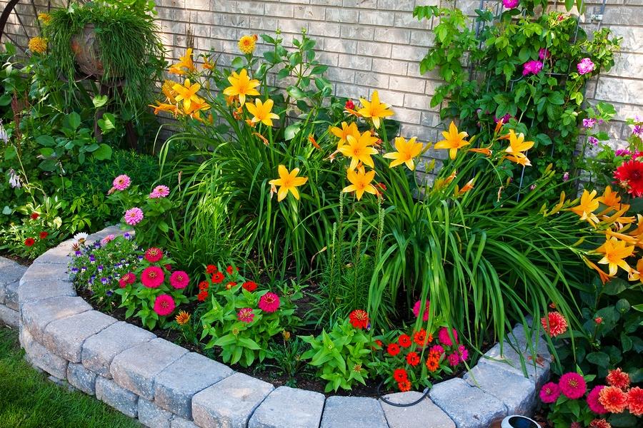 Цветы и дома и в саду